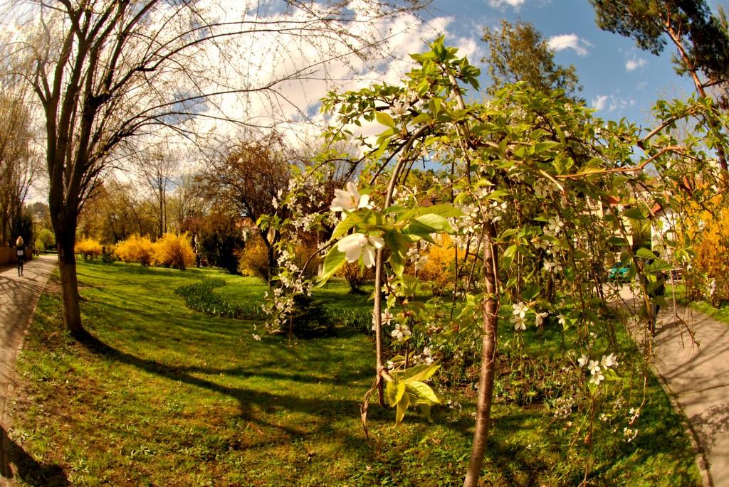 Aprilie în parcul central Brașov