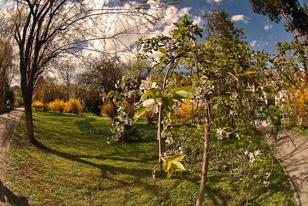 Brasov parc central
